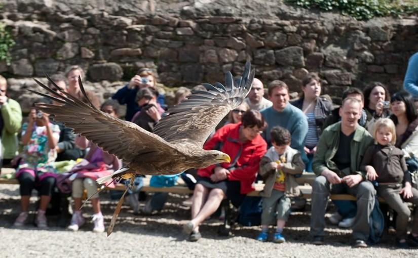 Les lieux touristiques d'Alsace – Volerie des Aigles