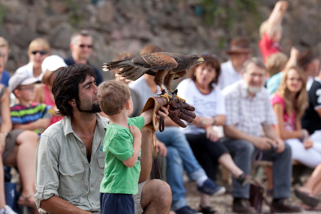 Volerie des Aigles - Spectacle