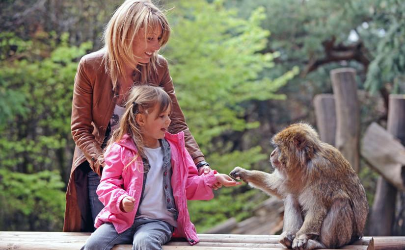L'Alsace en famille : que visiter et que faire en Alsace en famille ?