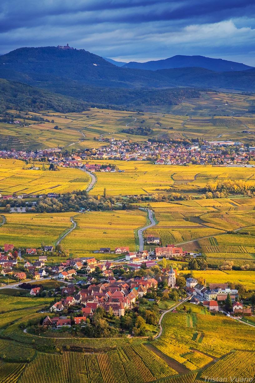 Alsace à vue de coucou, Tristan Vuano - L'automne sur Zellenberg et le Château du Haut-Koenigsbourg en fond